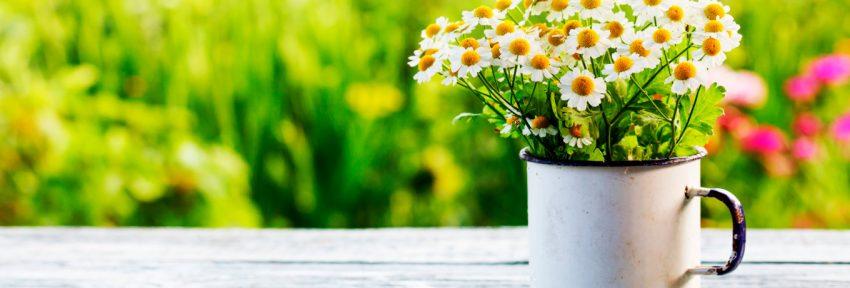 Brinde Primavera